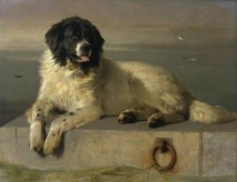 The Distinguished Member of the Humane Society, by E.H. Landseer