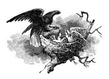 eagle+nest